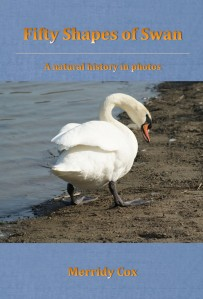 Swan-Cover
