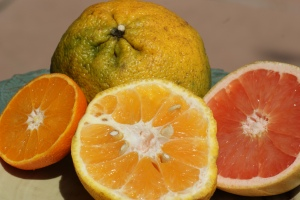Tangelo or Uglifruit